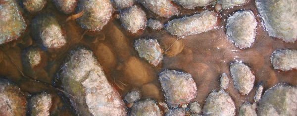 Fresh Water by Luke Barker MC5556